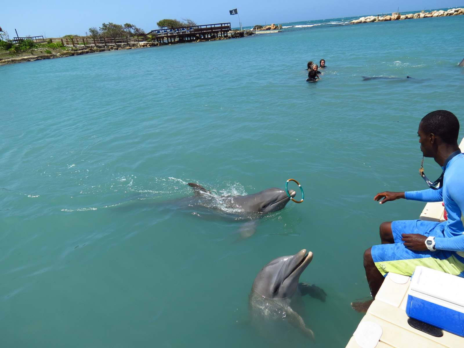 dolphins cove jamaica Swimming with Dolphins in Jamaica
