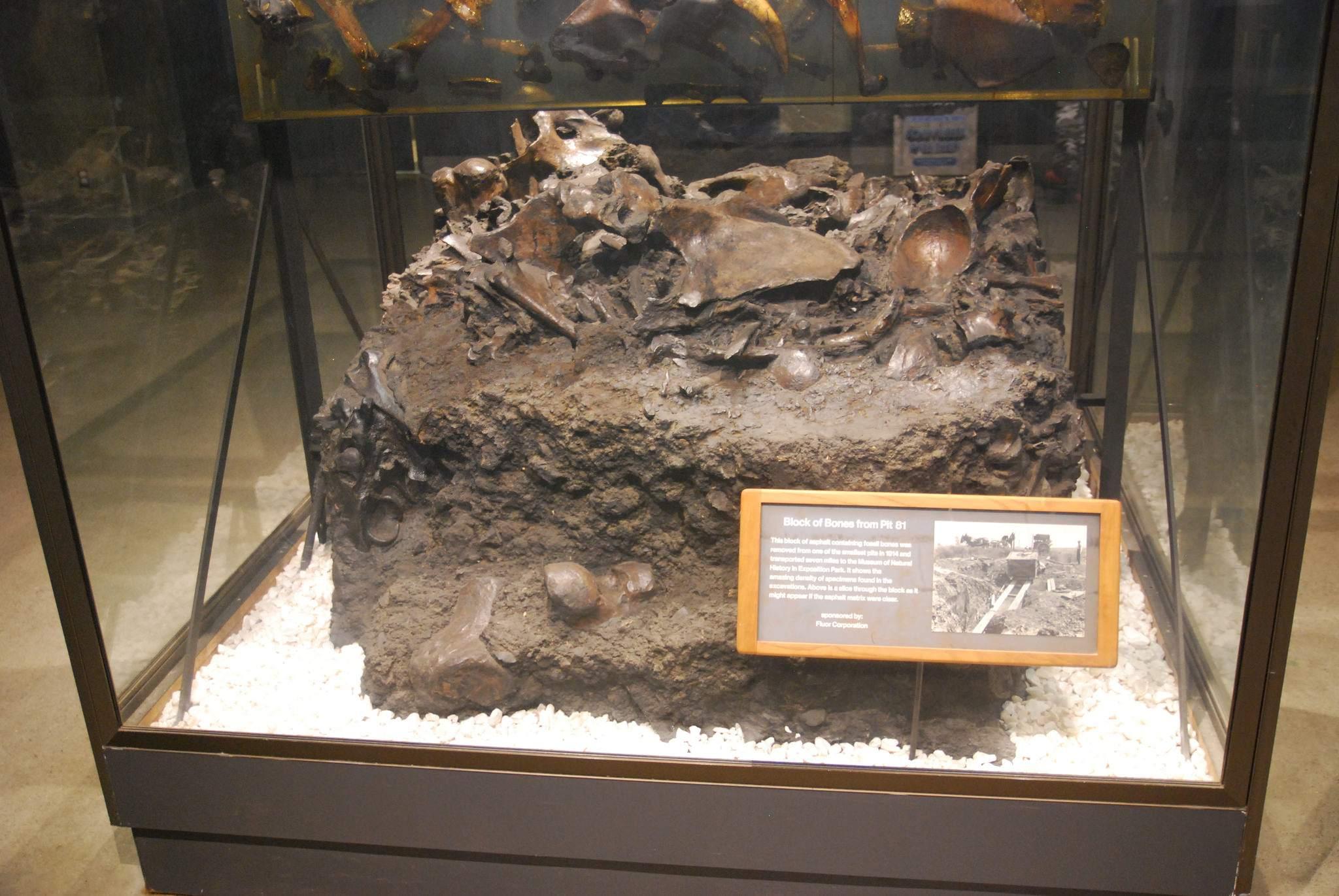 la brea tar pits10 La Brea Tar Pits and Museum in LA