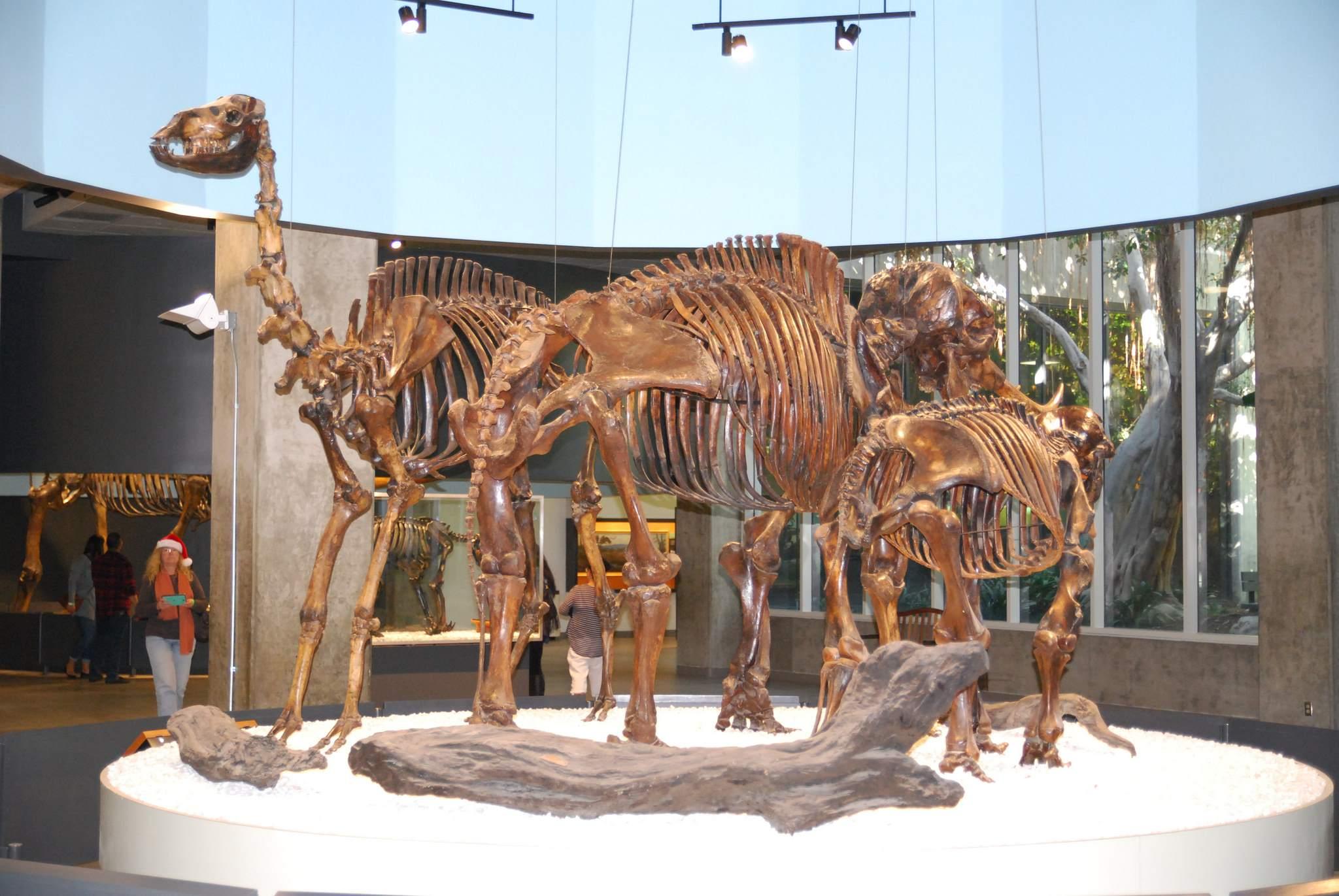 la brea tar pits2 La Brea Tar Pits and Museum in LA