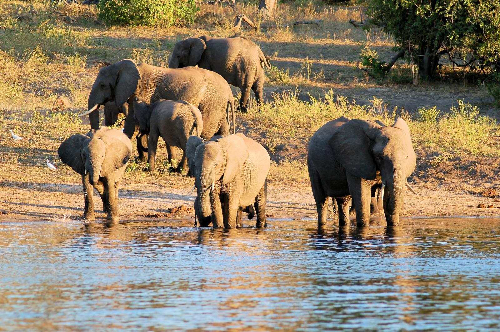 chobe riverfront1 Chobe Riverfront, Visit Botswana