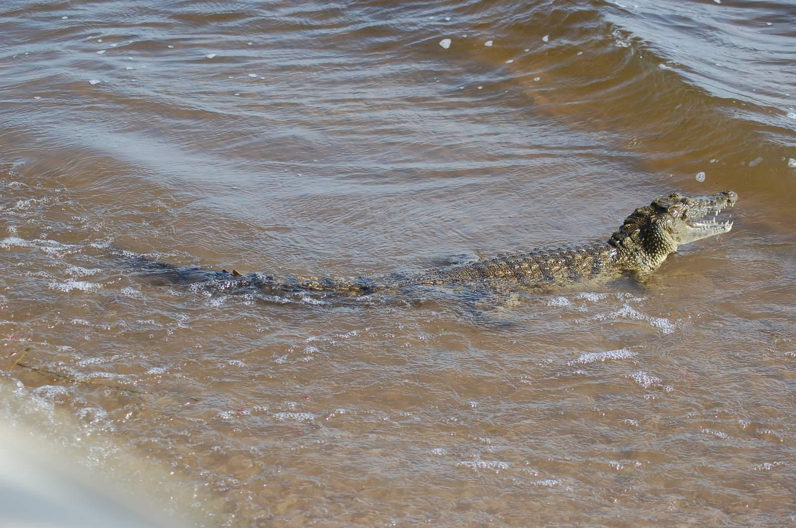 chobe riverfront5 Chobe Riverfront, Visit Botswana