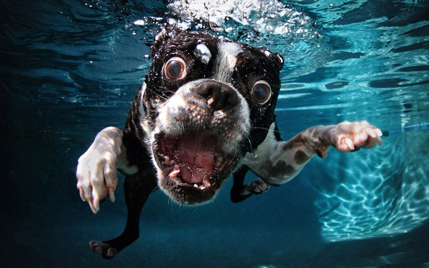cute dog Cute Dogs Underwater by Seth Casteel