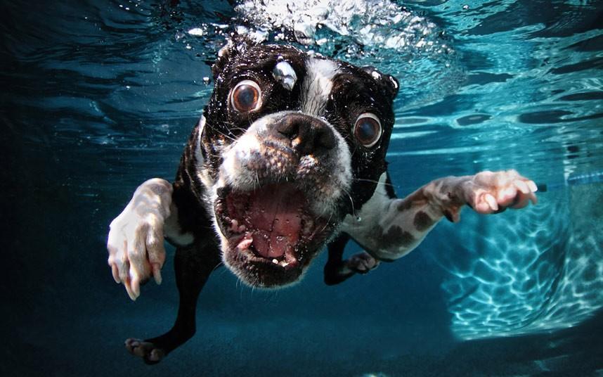 cute dog Cute Dogs Underwater by Seth Casteel