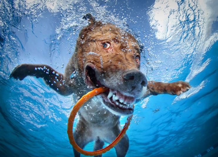 cute dog1 Cute Dogs Underwater by Seth Casteel