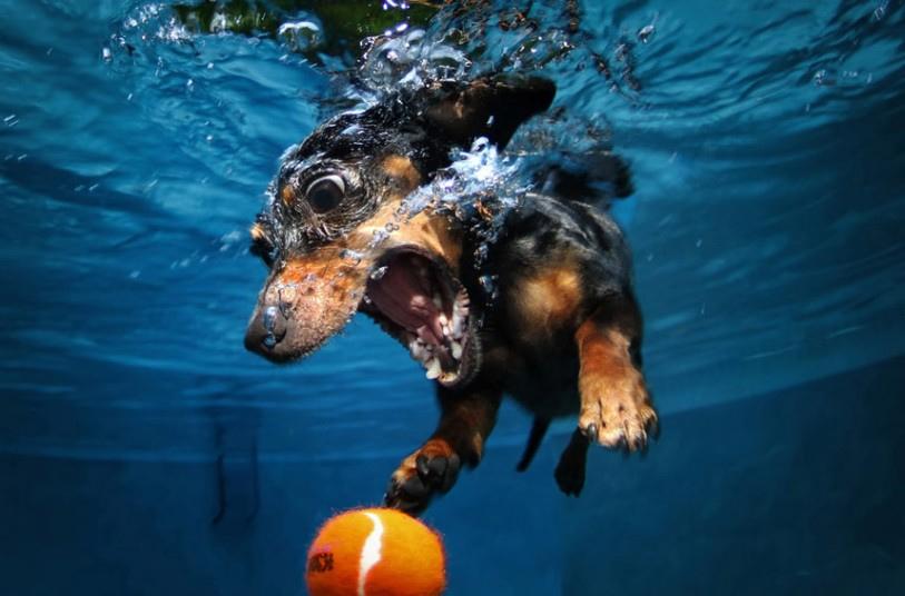 cute dog2 Cute Dogs Underwater by Seth Casteel