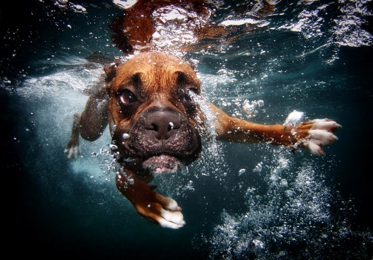 cute dog3 Cute Dogs Underwater by Seth Casteel