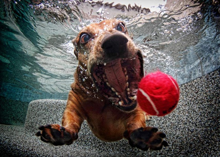 cute dog4 Cute Dogs Underwater by Seth Casteel