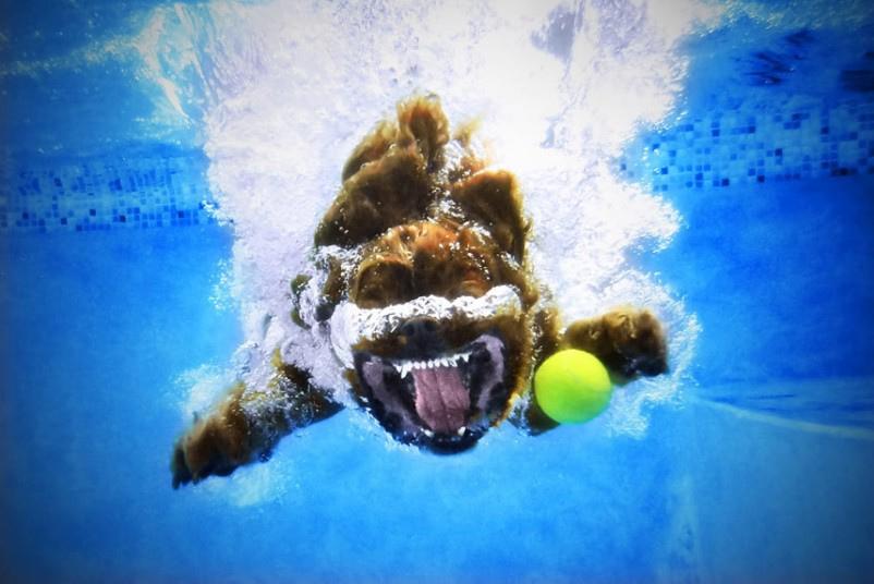 cute dog5 Cute Dogs Underwater by Seth Casteel