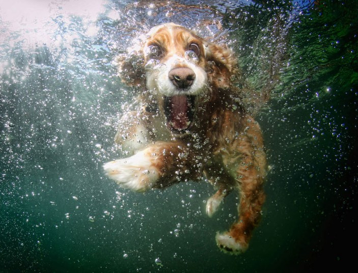 cute dog7 Cute Dogs Underwater by Seth Casteel