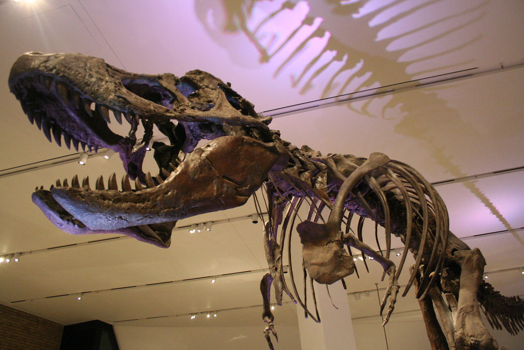 royal ontario museum2 The Largest Collection of Dinosaur Fossils in North America