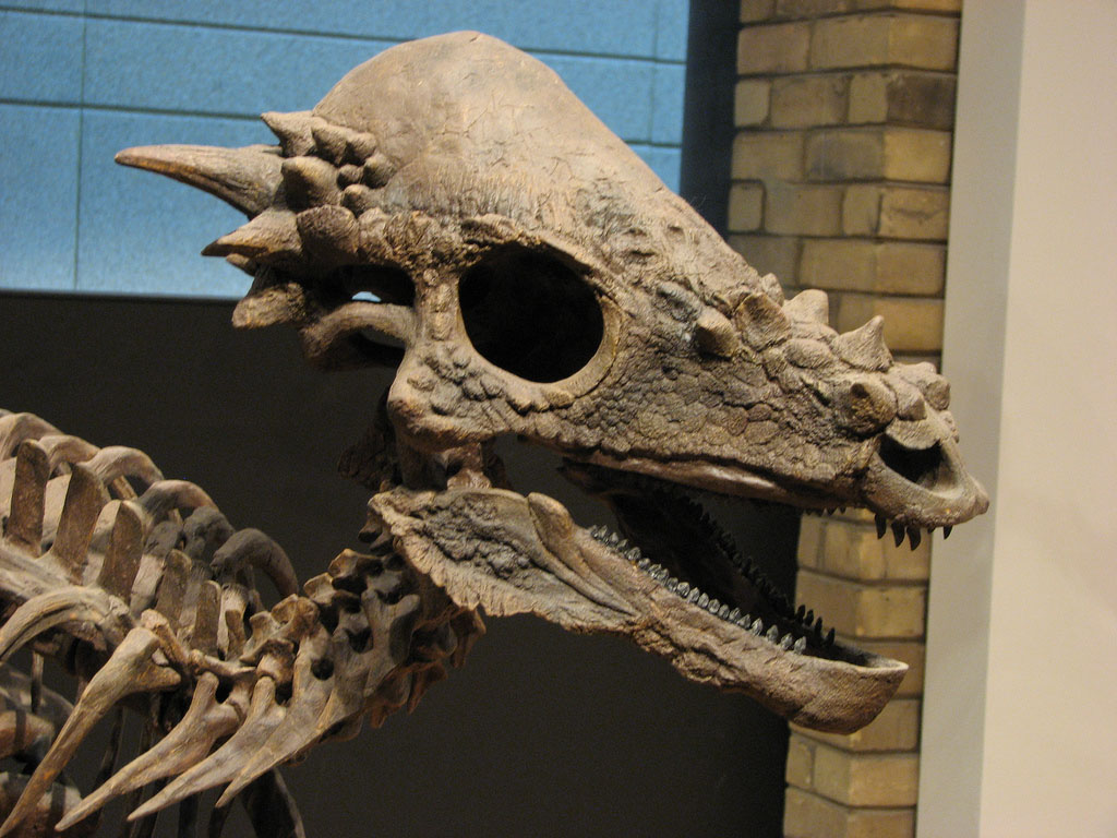 royal ontario museum5 The Largest Collection of Dinosaur Fossils in North America