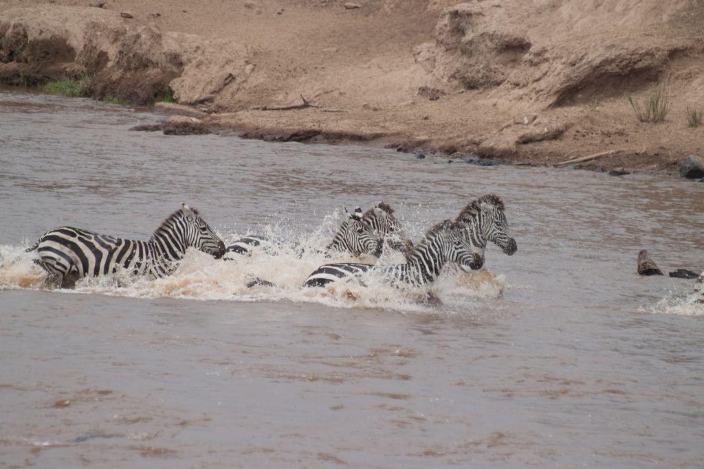 kenya safari12 Masai Mara Camping Safari in Kenya