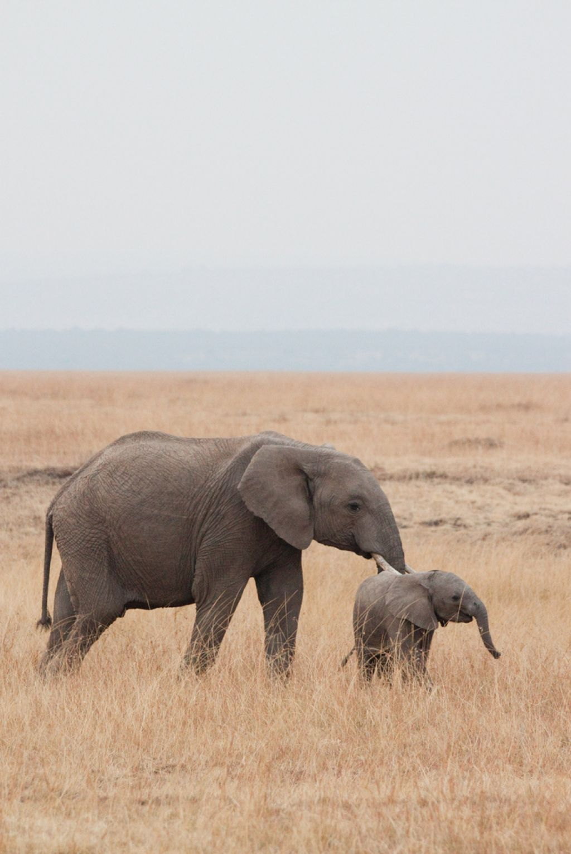 kenya safari15 Masai Mara Camping Safari in Kenya