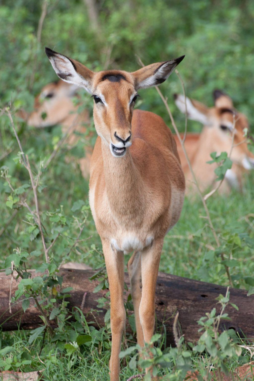 kenya safari16 Masai Mara Camping Safari in Kenya