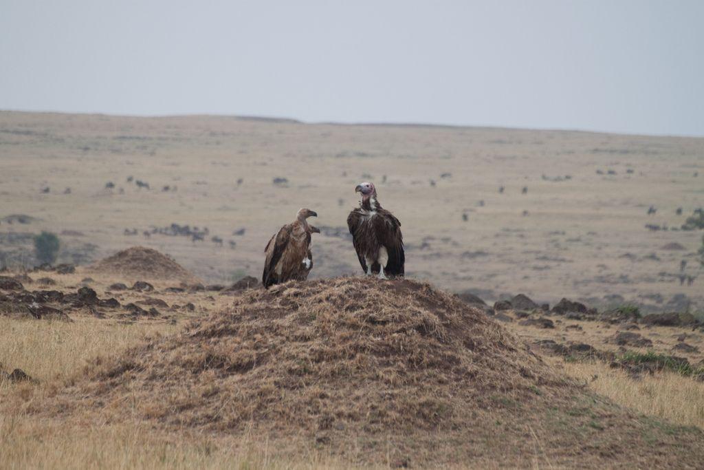 kenya safari19 Masai Mara Camping Safari in Kenya