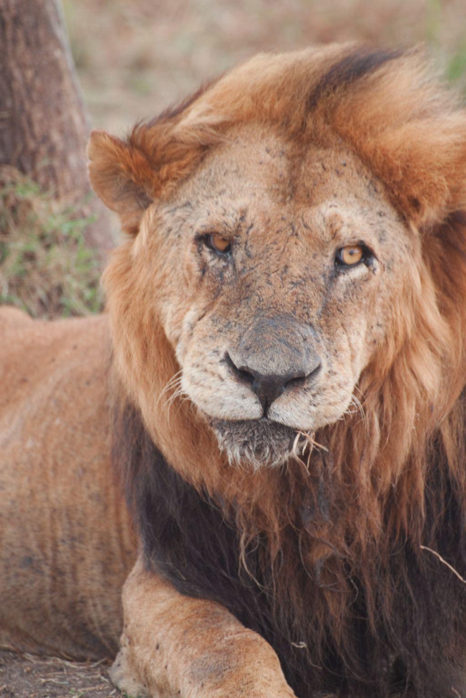 kenya safari24 Masai Mara Camping Safari in Kenya