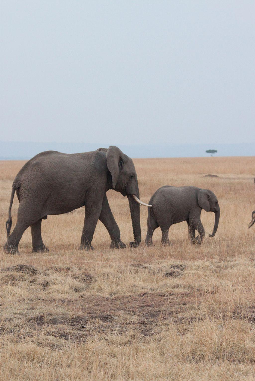 kenya safari5 Masai Mara Camping Safari in Kenya
