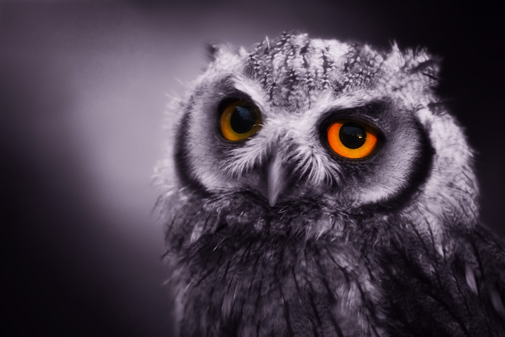 owl1 Most Interesting Eyes Of A Night Owl