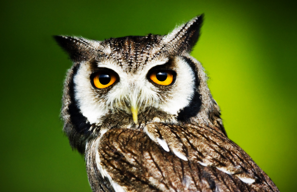 owl2 Most Interesting Eyes Of A Night Owl