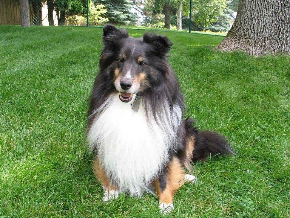 top ten smartest dogs10 Top Ten of Smartest Dogs