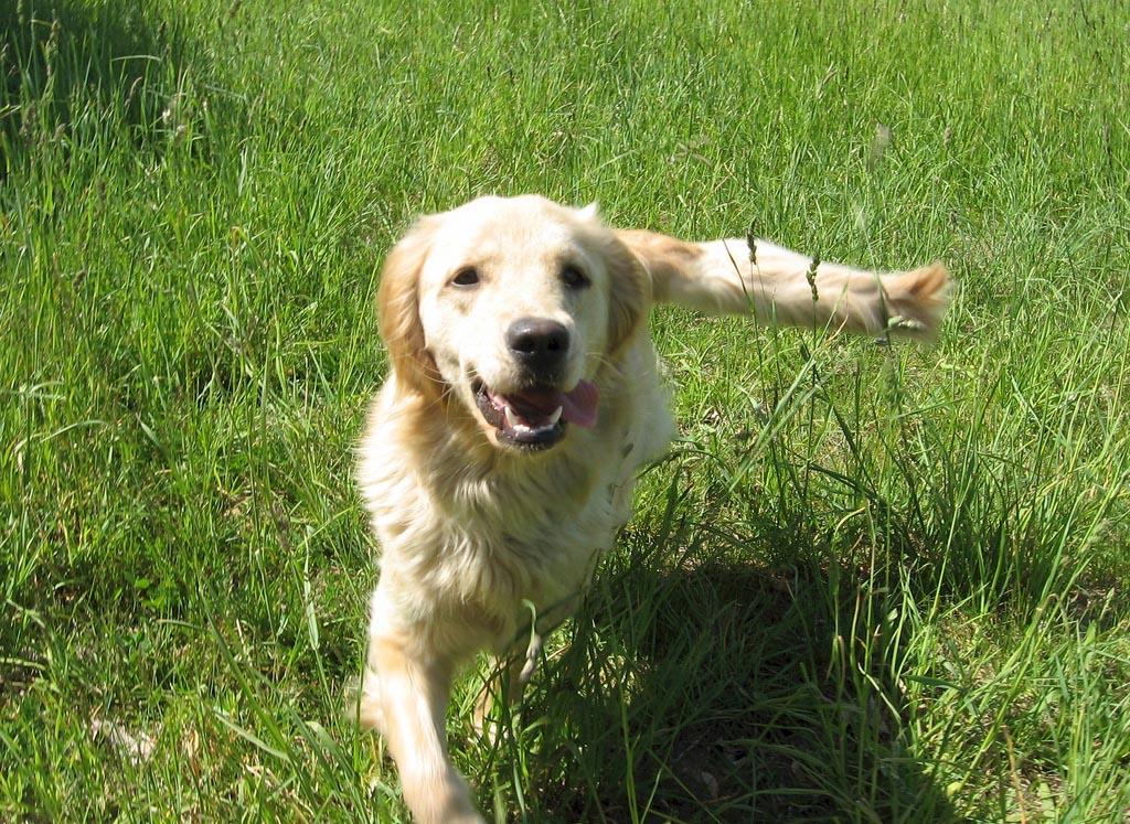 top ten smartest dogs12 Top Ten of Smartest Dogs