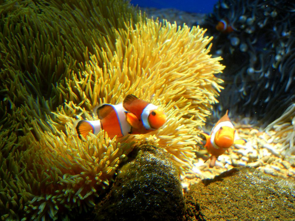 waikiki aquarium1 Welcome to Waikiki Aquarium