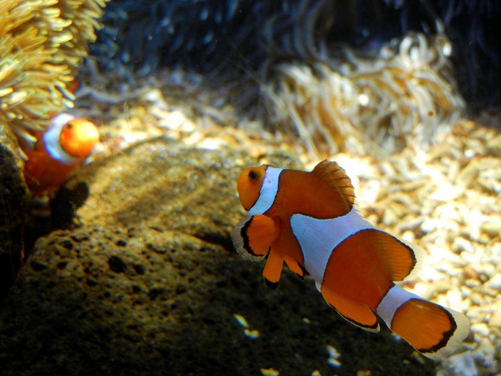 waikiki aquarium2 Welcome to Waikiki Aquarium