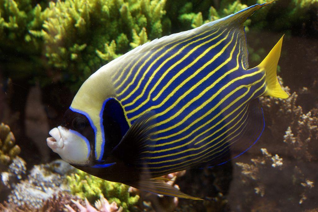 waikiki aquarium5 Welcome to Waikiki Aquarium