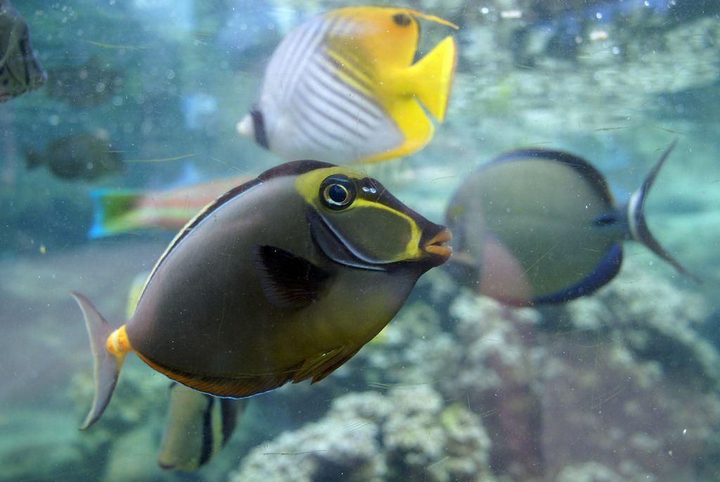 waikiki aquarium7 Welcome to Waikiki Aquarium