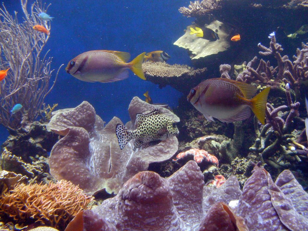 waikiki aquarium8 Welcome to Waikiki Aquarium