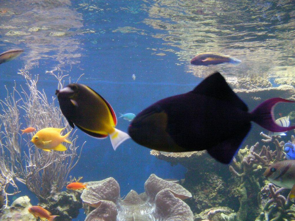 waikiki aquarium9 Welcome to Waikiki Aquarium