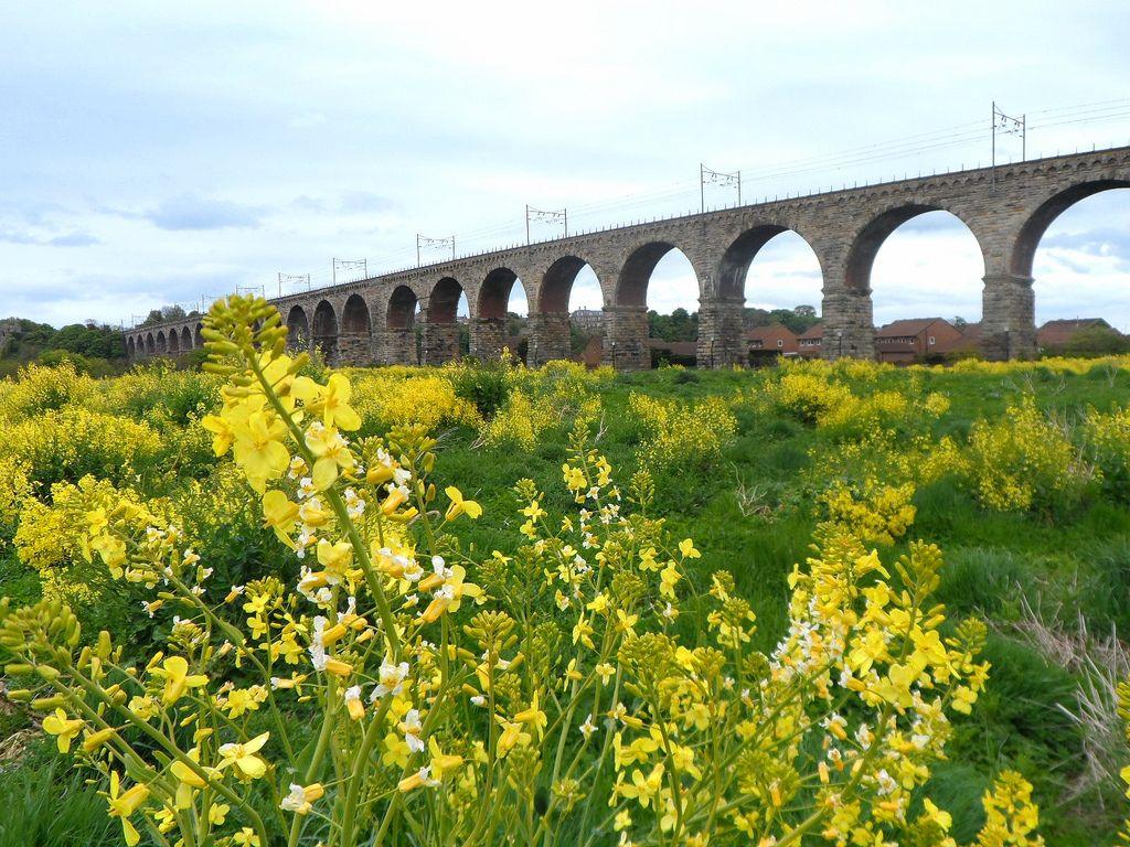 royal border bridge3 Royal Border Bridge at Berwick upon Tweed