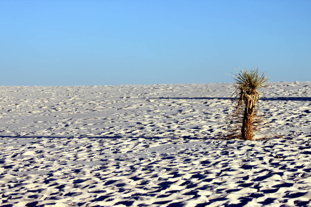 white sands4 The Scenic Beauty of the White Sands National Park, New Mexico