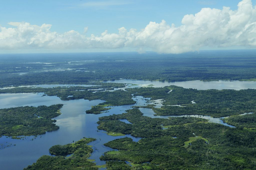 amazon rainforest1 Top Facts about Amazon Rainforest