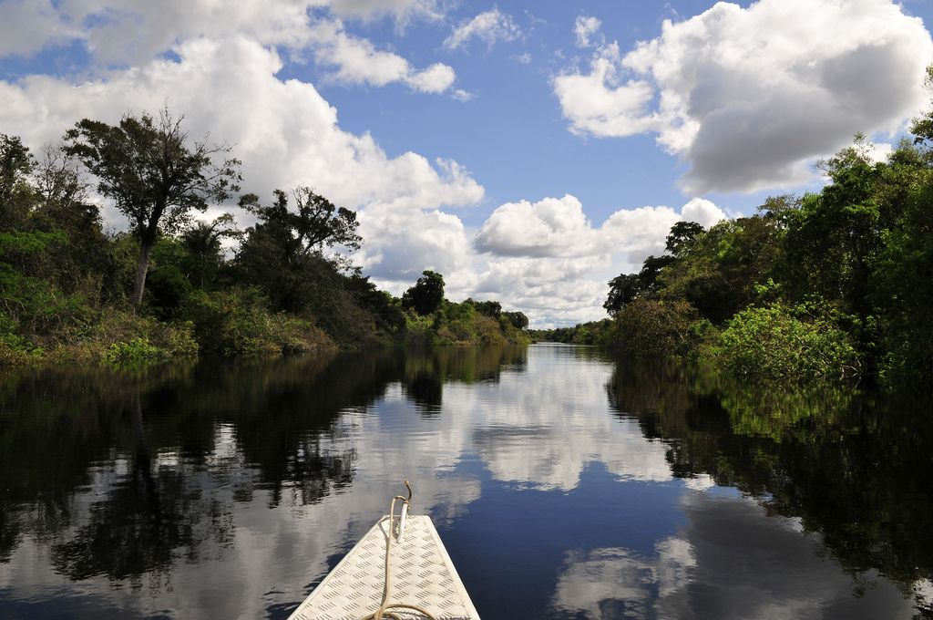 amazon rainforest10 Top Facts about Amazon Rainforest