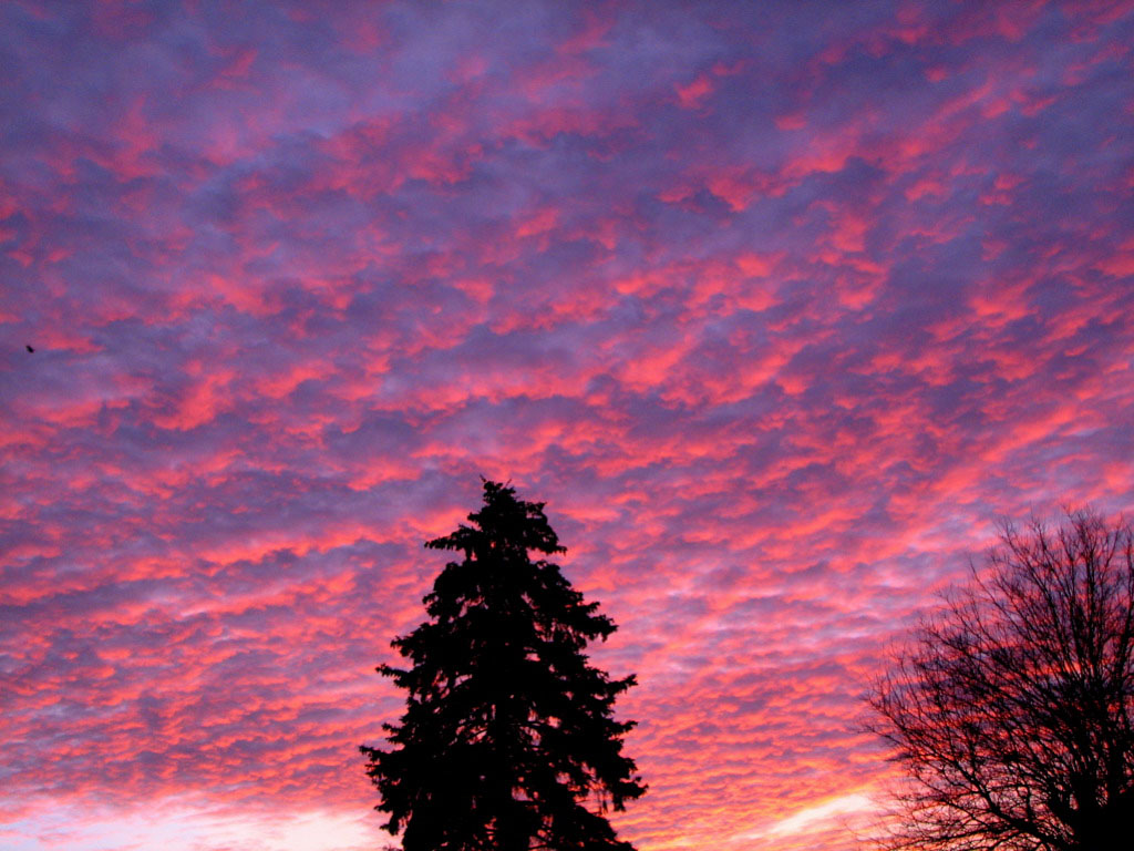 pink sky5 Why Does the Sky Looks Pink
