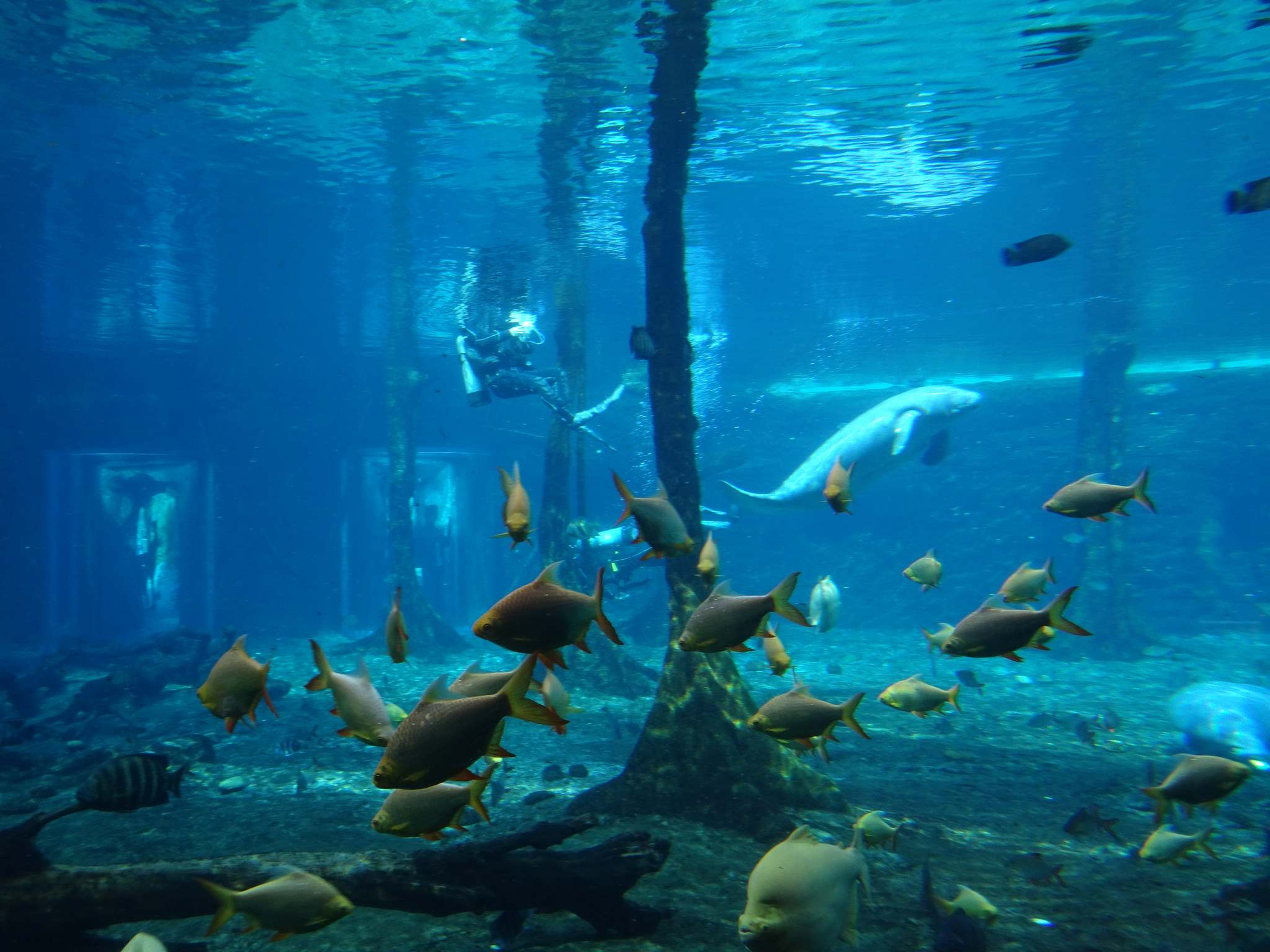chimelong ocean kingdom12 Chimelong Ocean Kingdom   Worlds Largest Aquarium