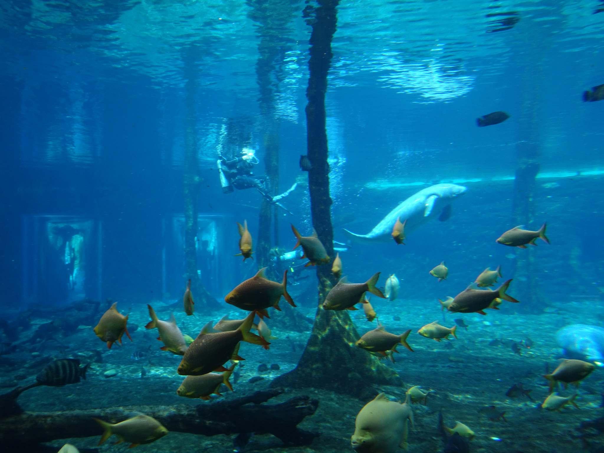 chimelong ocean kingdom12 Chimelong Ocean Kingdom   Worlds Largest Aquarium