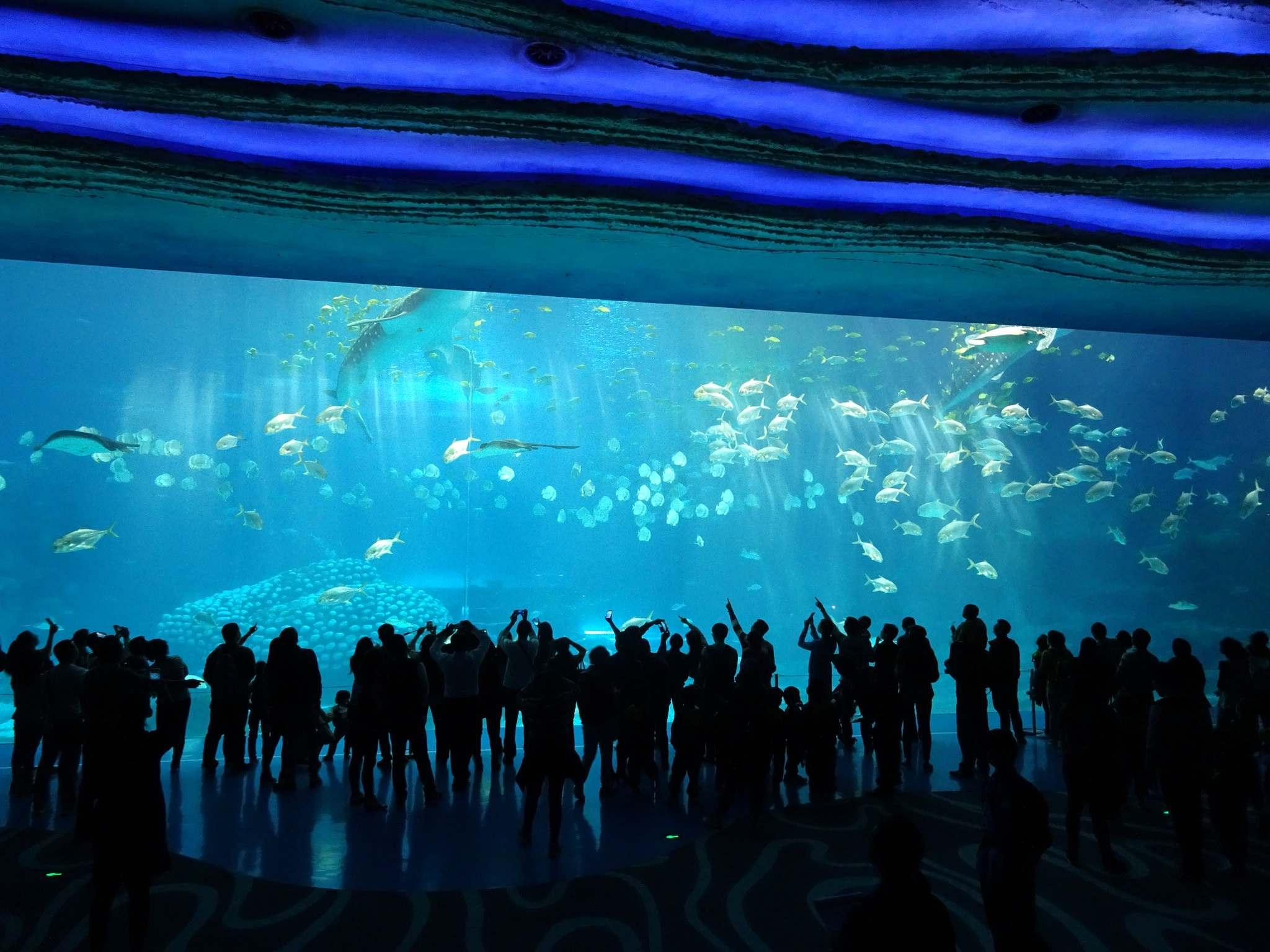 chimelong ocean kingdom14 Chimelong Ocean Kingdom   Worlds Largest Aquarium