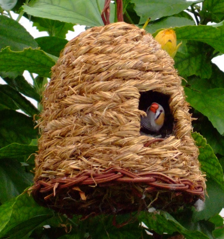 bird house18 Smarten Up Your Garden with Stylish Bird House