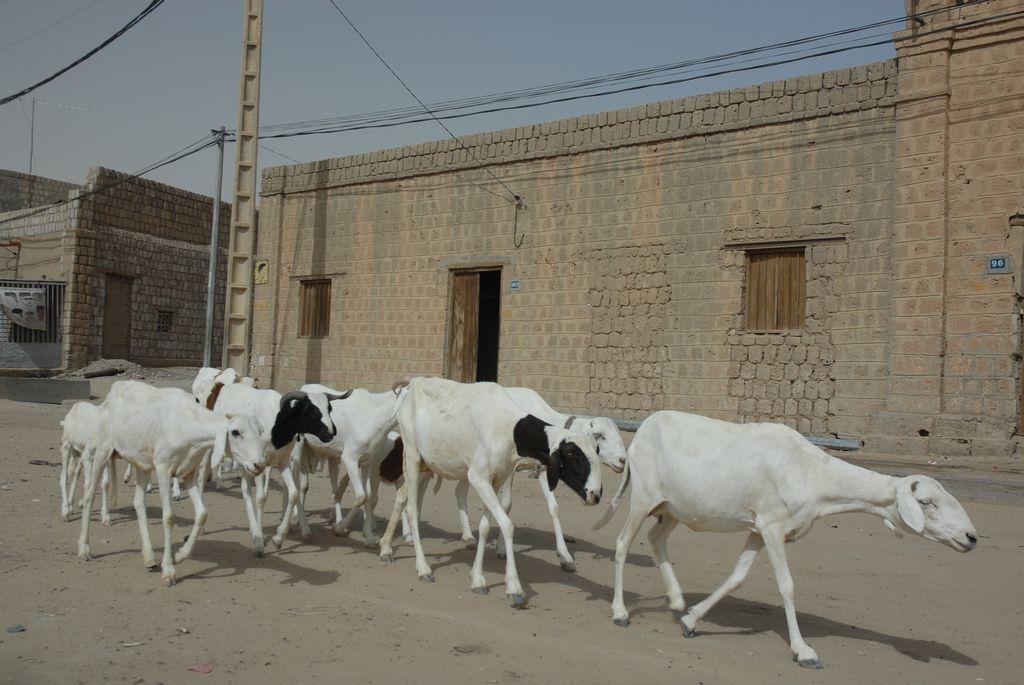 timbuktu6 Typical Street Scene in Timbuktu