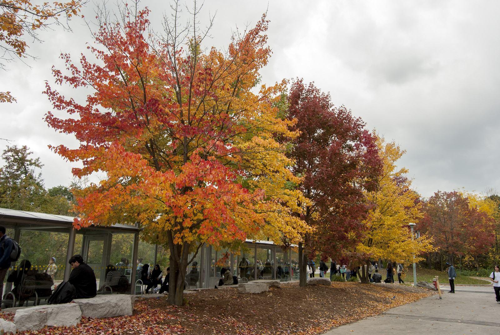 university toronto11 University of Toronto Mississauga