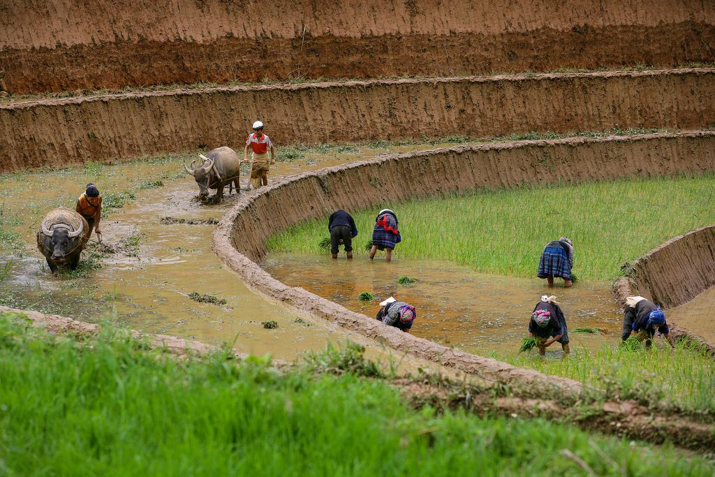 mu cang chai6 Amazing Place   Rice Terrace Fields in Mu Cang Chai, Vietnam