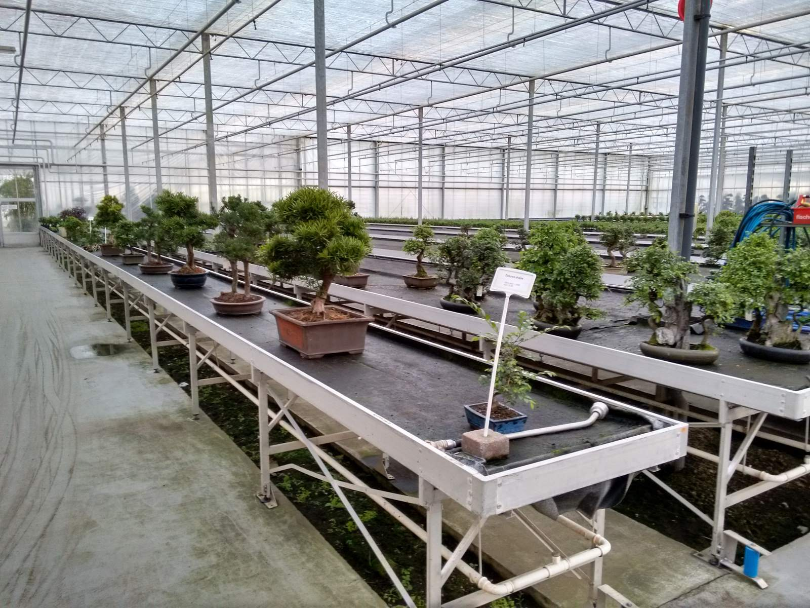 bonsai lodder1 Bonsai Lodder   One of the Largest Bonsai Store in the World, Netherlands