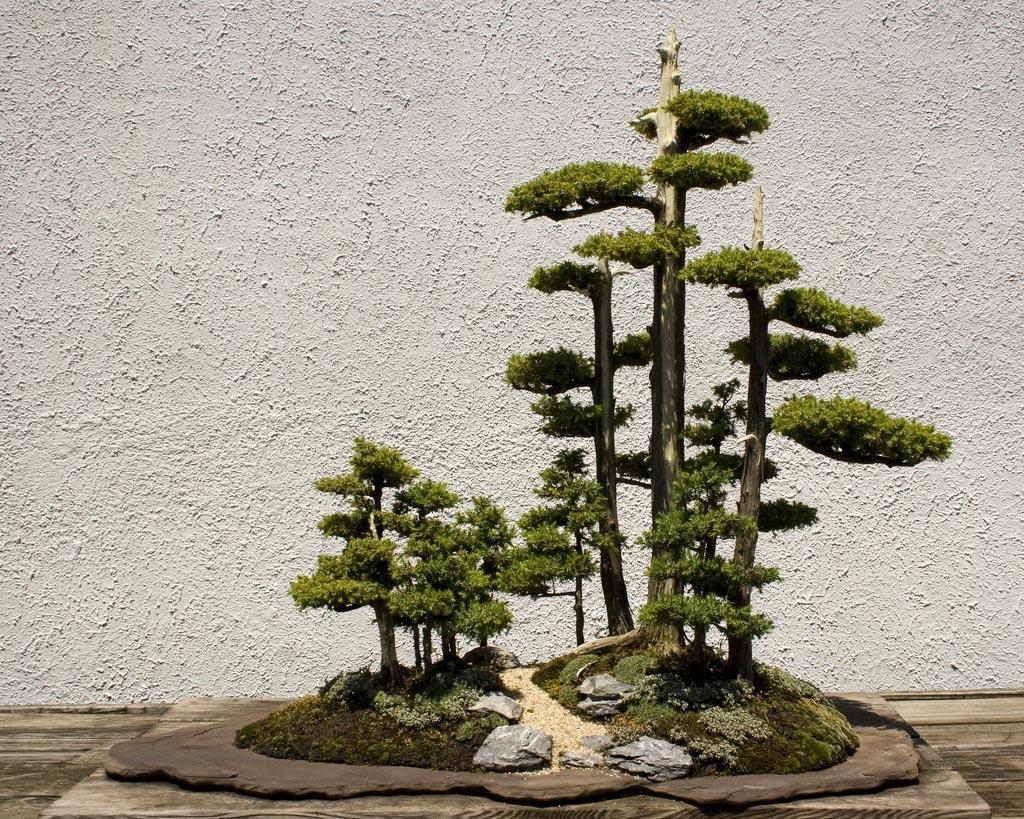 bonsai tree18 What is a Bonsai Tree ?