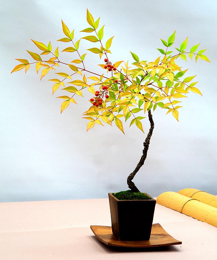 bonsai tree4 What is a Bonsai Tree ?