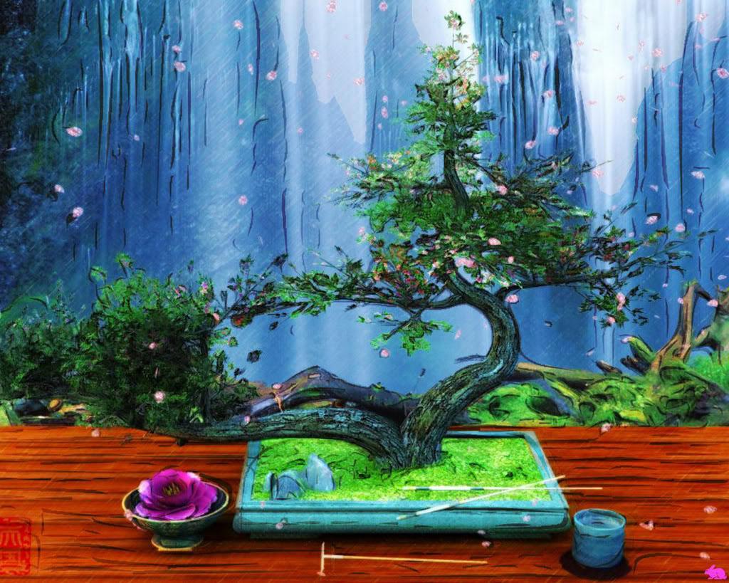 bonsai tree5 What is a Bonsai Tree ?