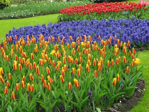 keukenhof17 Colorful Keukenhof Gardens in Netherlands