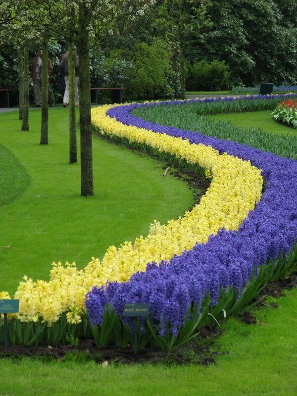 keukenhof18 Colorful Keukenhof Gardens in Netherlands