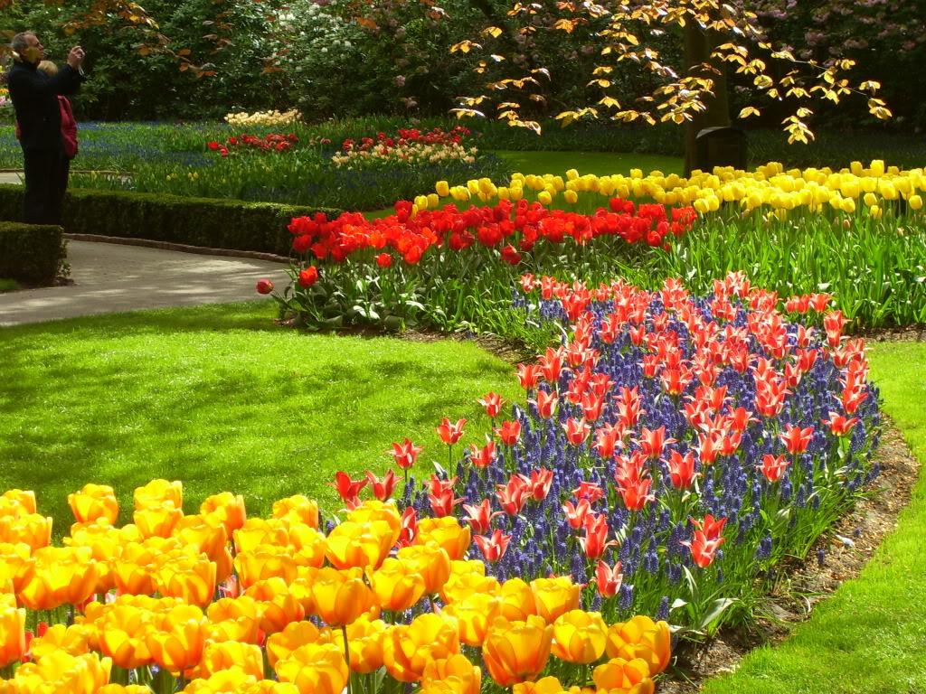 keukenhof6 Colorful Keukenhof Gardens in Netherlands